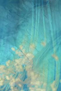 Img-blauehaut