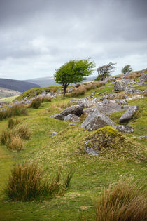 bodmin moor by photoplace