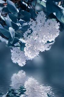Spiegelung  by Violetta Honkisz