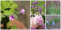 Garten-collage-beschriftet