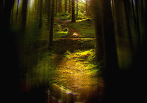 Through the Pines 3 by Dave Harnetty