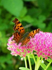 Schmetterlingsinvasion von Norbert Hergl