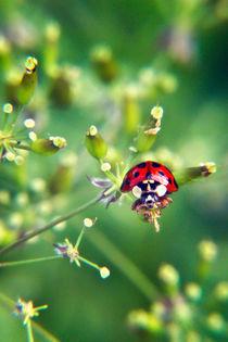 Ladybug von Vicki Field