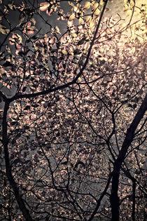 Trees-night-moonlight-vlazny