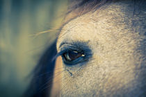 Soulful Horse Eye by Priya Ghose