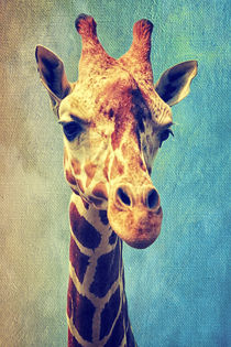 Die Giraffe by AD DESIGN Photo + PhotoArt