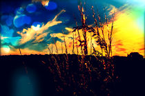 Wheatgrass2