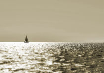 Segler-mare