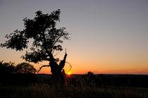 Tree in sunset von Michael Ebardt