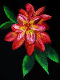 Wandblume von konni