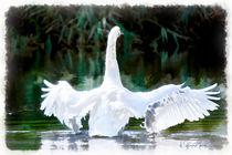 Swan-aqua-real