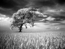 IR Baum von Peter Rohde