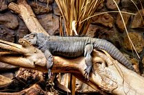 Iguana on a Tree trunk by Helmut Schneller