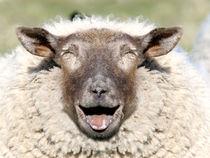 Lustiges Schaf von Peter Rohde