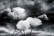 'Wild Beauty' by CHRISTINE LAKE