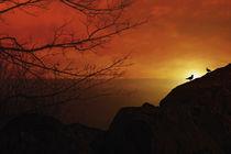 Enjoying-the-sunset