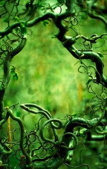 Curly tree branches  by Jarek Blaminsky