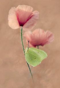 Poppies von Jarek Blaminsky