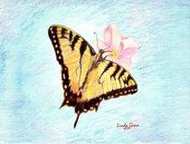 Monarch-on-blue-bkgrnd
