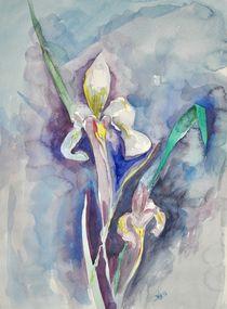 Wasserlilie von Barbara Straessle
