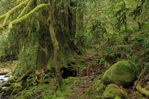 Temperate rainforest of Goldstream Park, Vancouver Island by Louise Heusinkveld