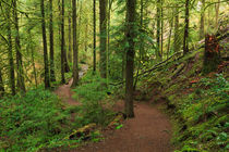 Temperate Rainforest of the Pacific Northwest by Louise Heusinkveld