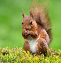 What a Beautiful Nut! by Louise Heusinkveld