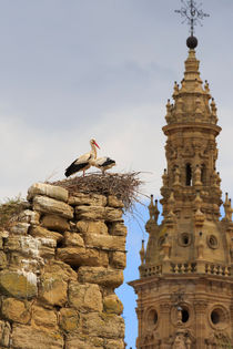 Storks nest on the walls in Sto Domingo de la Calzada, Spain by Louise Heusinkveld