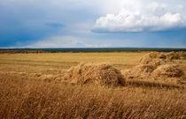 Hay field with a beveled  by larisa-koshkina