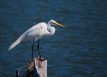 Great Egret At His Post von John Bailey