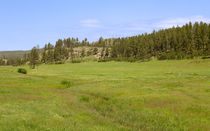 The Grasslands Of Custer State Park von John Bailey