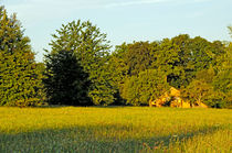 Sommerwiese am Morgen by Michael Ebardt