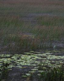 D-01799-e2-grassy-marsh-crop