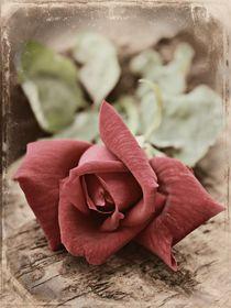 Vintage Red by Clare Bevan