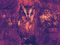 Owl-49el