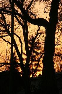 Sunset behind trees von atari-frosch