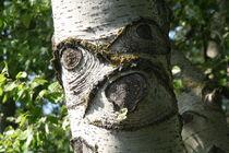 Screaming birch von atari-frosch
