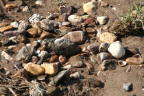 Wet stones and shells at Rhine's strand by atari-frosch
