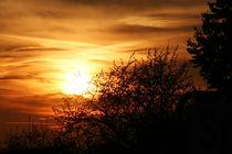 Evening sun behind bushes von atari-frosch