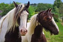 Pferde by AD DESIGN Photo + PhotoArt