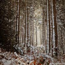 Snowed Forest von Antonio Jorge Nunes