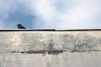 Auf der Mauer, auf der Mauer... by Bastian  Kienitz