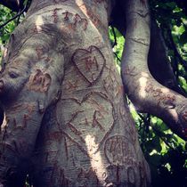 Tattooed tree by Ruth Baker