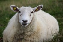 mein Lieblingsschaf - my most adorable sheep by Kathy Lemburg