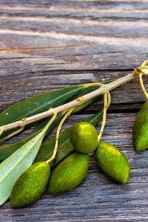 Olivenzweig - Olive twig von Thomas Klee