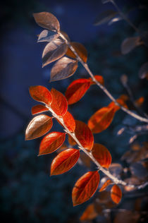 Autumn Red Branch by cinema4design