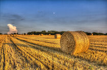 Summer on the farm by David Pyatt