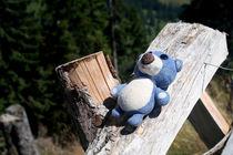Sonnenbad für kleinen Bären by Olga Sander