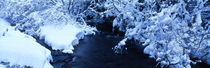 Brook in winter by Intensivelight Panorama-Edition