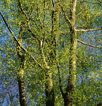 Spring green by Intensivelight Panorama-Edition